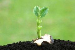 土壤养分检测仪品牌哪家好?